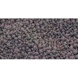 Sedum Cyaneum 3,5-5cm